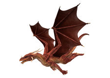 Red Dragon On White. 3D digital render of a red fantasy dragon flying isolated on white background royalty free stock photography