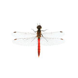 Red dragonfly. Isolated on a white background Stock Photo
