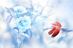 Red dragonfly in the snow on blue roses in a fairy garden. Artistic Christmas image. Red and blue tone royalty free stock photos