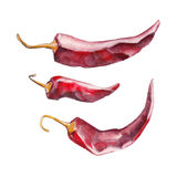 The red dried chile pepper on white background, watercolor illustration. In hand-drawn style Stock Illustration
