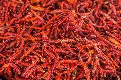 Red dried chili Stock Images