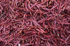 Red dried chilli cooled out already Royalty Free Stock Photography