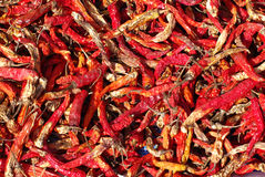 Red dried chillies texture background Royalty Free Stock Image