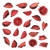Red dried flower leaves potpourri Royalty Free Stock Photography