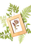 Red dried plant in a frame. On a natural background Stock Photography