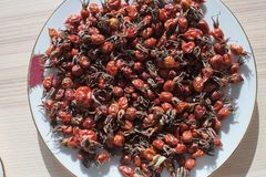 Red Dried Rose Hip royalty free stock photography