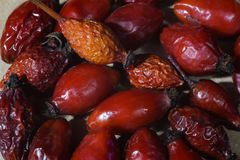 Dried rosehips Stock Images