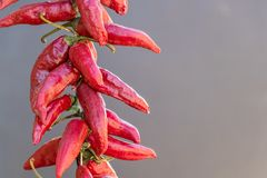 Red dry chili pepper close-up on grey background stock photos