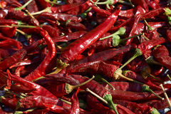 Red dry chili peppers Royalty Free Stock Photo