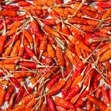 Red dry chilli pepper Royalty Free Stock Photo