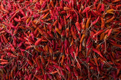 Red dry chilli Royalty Free Stock Photo