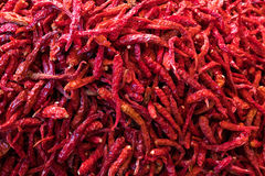 Red dry chilli Stock Photography