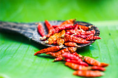 Red dry chilli is very hot in thai food Stock Images
