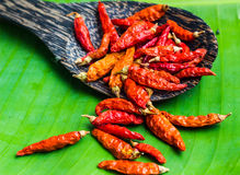 Red dry chilli is very hot in thai food Stock Photography