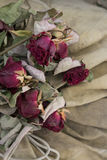 Red dry roses  on beige background Royalty Free Stock Photography