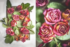Red dry roses, pattern, diptych, postcard royalty free stock image