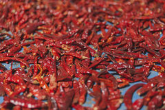 Red Drying Chilly on the table Royalty Free Stock Image