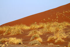 Red dune with hassock Royalty Free Stock Images