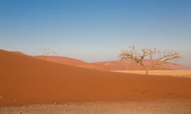 Red dune Royalty Free Stock Image