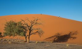 Red dune Royalty Free Stock Images
