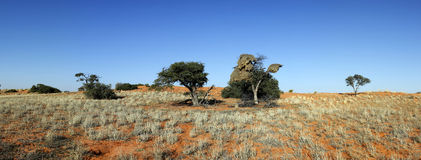 Red dune in Kalahari. Panorama of red dune in the Kgalagadi Transfrontier National Park in South Africa and Botswana Royalty Free Stock Photos