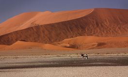 Red dune in Namibia, Africa Royalty Free Stock Photography