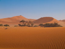 Red dune of Namid desert Stock Images