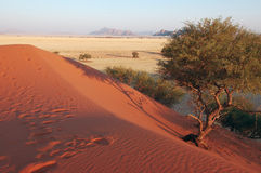 Red Dune and Tree Royalty Free Stock Photography
