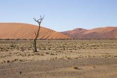 Red dunes in the Namib Desert, in Sossusvlei, Namibia Royalty Free Stock Photos