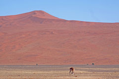 Red dunes of sossusvlei Royalty Free Stock Photography