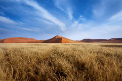 Red Dunes in Sossusvlei Stock Image
