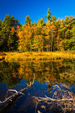 Red Eagle Pond, in White Mountain National Forest, New Hampshire Royalty Free Stock Photography