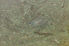 Red-eared slider Trachemys scripta elegans Royalty Free Stock Photo