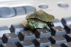 Red-eared Slider Turtle Royalty Free Stock Photography