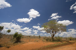 Red earth & bush landscape, Tsavo, Kenya Royalty Free Stock Image