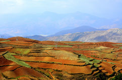 The red earth Stock Image
