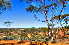 Red earth of the Kalgoorlie landscape. The Kalgoorlie landscape Western Australia Stock Photo