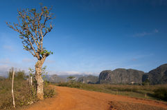 Red earth road and cuban mogotes, Vinales, Cuba Stock Images