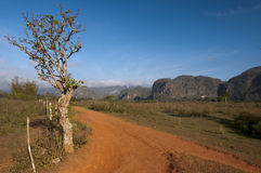 Red earth road and cuban mogotes, Vinales, Cuba Stock Photos