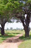Red earth trail in Tsavo West Park Royalty Free Stock Photos