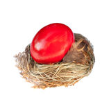 Red easter egg in a bird nest Stock Image