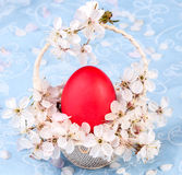 Red easter egg on blue background Stock Photos