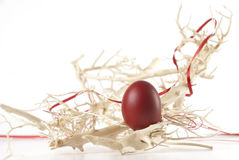Red Easter egg between branches Stock Image