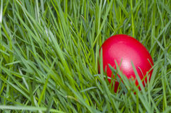 Red Easter Egg in the Grass Closeup Royalty Free Stock Images