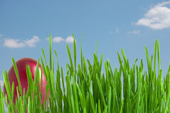 Red easter egg in green grass Royalty Free Stock Images