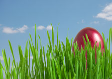 Red easter egg in green grass Royalty Free Stock Photo