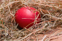 Red easter egg in a hay nest Stock Photography