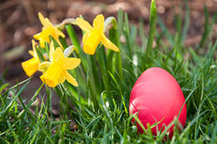 Egg hunt Royalty Free Stock Photos