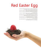 Red Easter egg in the nest Royalty Free Stock Images
