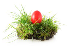 Red easter egg in a nest of grass, isolated on white Royalty Free Stock Photos